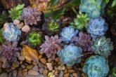 Skalniak w swoim ogrodzie – jakie rośliny wybrać wiosną