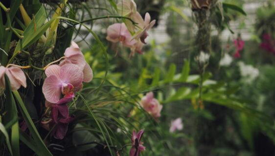 Piękne storczyki w Twoim domu