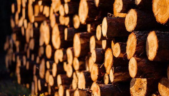 Wygrzej się przy kominku – o drewnie na opał